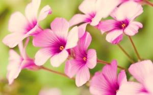2014-04 Flowers